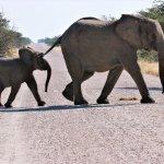 Elephants of Etosha Namibia