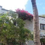 My Blue Hotel Foto