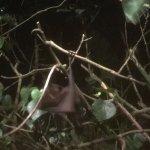 Photo de Night Safari