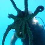 Diver with small octopus