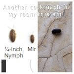 Another cockroach crawling in my room this am. Mentioned it to the staff as I was checking out a