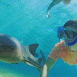 Snorkeling at Shark Ray Alley. This 7 footer was a curious beauty!