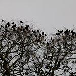 Zdjęcie The Dark Hedges