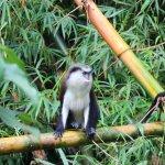 monkeys in the national park