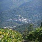 Santamaria Vineyards