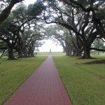 300 year old Virginia oaks make the oak alley