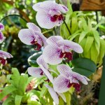 Orchids everywhere!