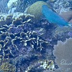 coral and parrot fish