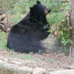 Birmingham Zoo Foto