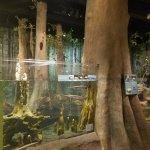 North Carolina Museum of Natural Sciences