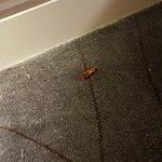 Cockroach - Room 906