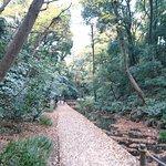 Photo of Todoroki Valley