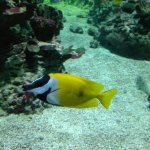 Photo de Aquarium Mare Nostrum