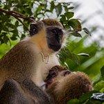 Foto de Barbados Wildlife Reserve