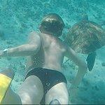Photo of Pro Dive International