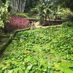 Φωτογραφία: Jardin de Balata