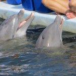Photo de Dolphin Research Center