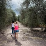 Guided visit to the olive trees