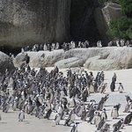 Colony on the beach