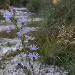 Wild flowers in October with river running at sunset