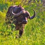 Bilde fra Makutsi Safari Springs