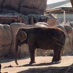 Elephant at El Paso Zoo