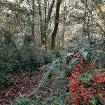 Nature Trail at Mission San Luis