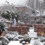 Our garden in winter