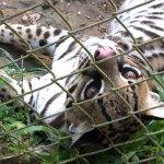 Foto de Amazoonico Animal Rescue Centre