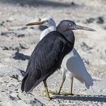 Heron Island Resort Foto