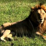 King of the jungle!!