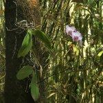 صورة فوتوغرافية لـ Hawaii Tropical Botanical Garden