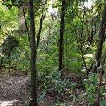 Photo of Areiao Park
