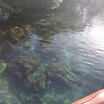 Xel-Ha's clear cyrstal waters and sea life