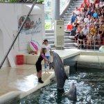 Photo of Dolphinarium