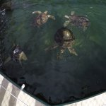 Turtles in the large tank