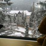 Yellow bear and Jennifer Penguin assess the view