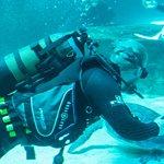 Two Oceans Aquarium Foto