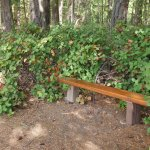 There are benches along the trails to rest and rehydrate.