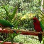 Foto de Kula Wild Adventure Park