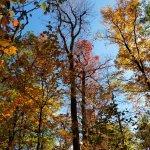 Fall Colors Oct-28
