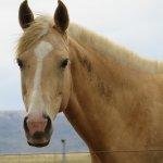 Friendly horse in adjoining paddock