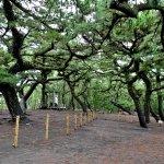 Miho Shrine resmi