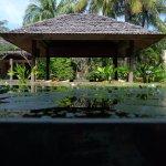 lotus pond next to Dalah