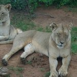 Photo of Ombretta Tours & Safaris - Day Tours