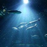 Photo of Nausicaa, National Sea Centre