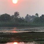 rice plantations's sunset