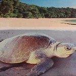Leatherback Turtle Tour