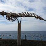 Cuvier's Beaked Whale Skeleton