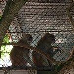 Photo of Zoo Pomerode